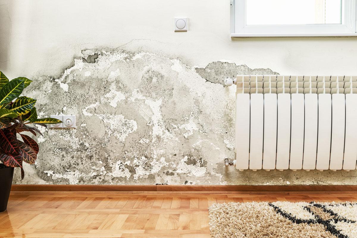 Schimmel und Feuchtigkeit Anhäufung an Wand eines Wohnzimmers - Schimmelentfernung Checkliste